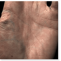 A Layered, Heterogeneous Reflectance Model for Acquiring and Rendering Human Skin